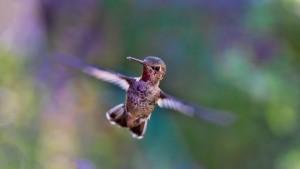hummingbird-691483_1280